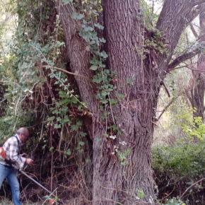 VÍDEO: Abriendo el sendero botánico del Río Gállego Biscarrués-Erés