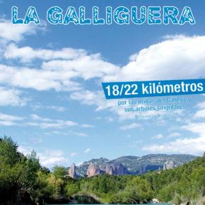 Sábado 22 de abril 9ª Marcha por La Galliguera - Abraza al río Gállego y sus árboles monumentales, 18-22 km