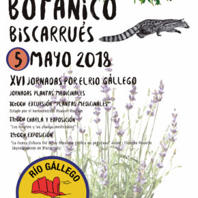 XVI Jornada de las plantas medicinales en la Galliguera