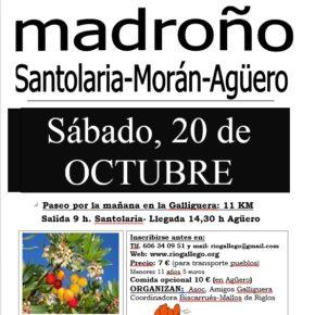 Sábado 20 de octubre: 10ª ruta del madroño: excursión el bosque de madroños Santolaria- Morán-Agüero - 13 km