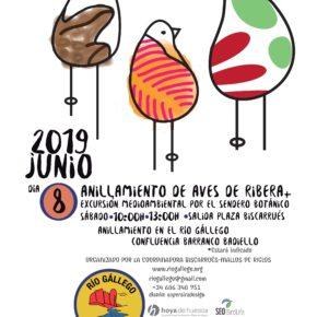 8 junio - Anillamiento de aves en el soto del río Gállego, en Biscarrués