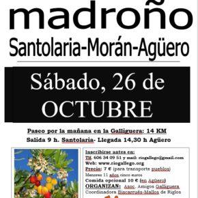 🍃 Sábado 26 de octubre: XI ruta del madroño: excursión por el bosque de madroños (Santolaria- Morán-Agüero  14km)