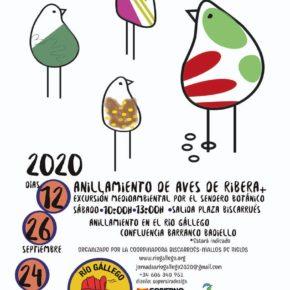 Sábado 26 de septiembre - anillamiento de aves en el Gállego